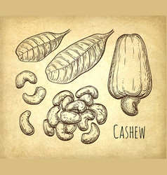 Cashew sketch set vector