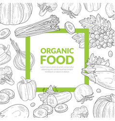 Green food banner template with space for text vector