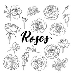 Set black and white outline roses buds and vector