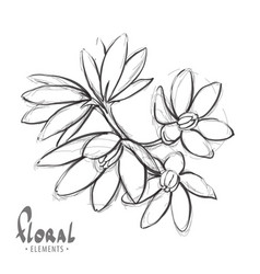 Sketch a delicate flower vector