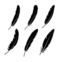 group of feather on white background vector image vector image