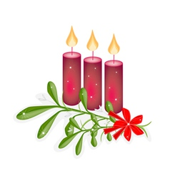 A Green Mistletoe and Three Christmas Candles vector image