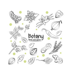 Botany herbs and spices vector