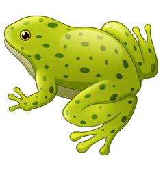 Green spotted frog isolated vector