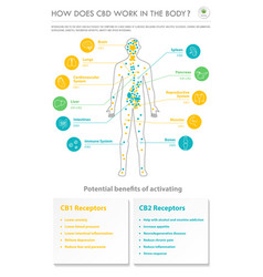 How does cbd work in body vertical business vector