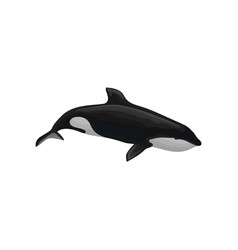 Killer whale marine mammal inhabitant of sea and vector