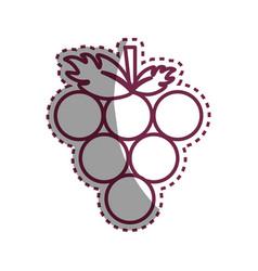 sticker delicious grape fruit icon vector image