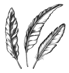 Black feathers Three objects vector