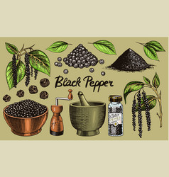 Black pepper set in vintage style mortar and vector
