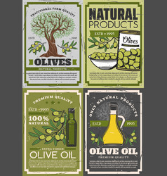 Extra virgin olive oil green fruits on branches vector