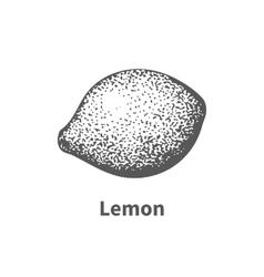 hand-drawn lemon vector image