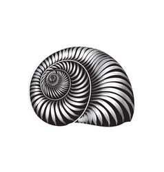 seashell engraved sign isolated sea shell marine vector image