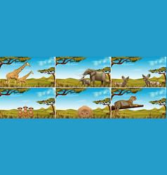 set of wildlife in savanna vector image