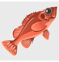 Image of the fish isolated in flat style vector image vector image