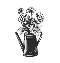bouquet flowers in a watering can garden vector image