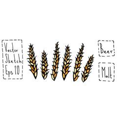 Bunch of malt doodle sketsh ripe ears of malt vector