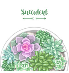 Card with various succulents in pot echeveria vector
