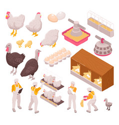 Chicken production icon set vector
