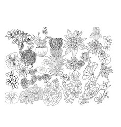 hand drawn botacal floral design elements vector image