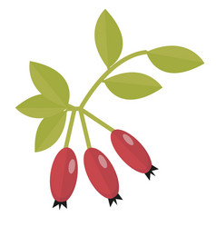 rosehip icon flat or cartoon style hawthorn vector image