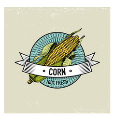 corn vintage set of labels emblems or logo for vector image vector image