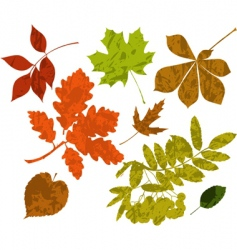 grunge silhouettes of leaves vector image vector image