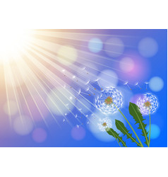 Dandelions with flying fluff on blue sky vector