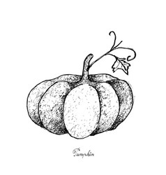 Hand drawn of pumpkins on a white background vector