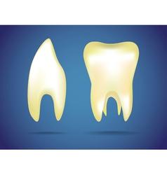 Human teeth vector image