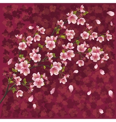 Japanese background with sakura blossom vector