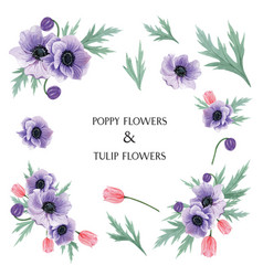 Popy and tulips flowers watercolor bouquets vector