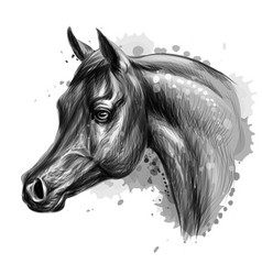 portrait an arab horse graphic monochrome vector image