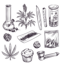 sketch cannabis cosmetic and medical plant vector image