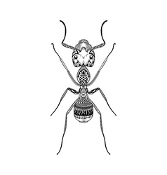 Zentangle stylized Black Ant Hand Drawn Termite vector