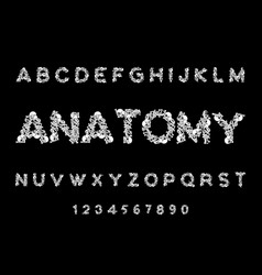 anatomy font skeleton abc letters bones skull and vector image vector image