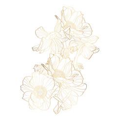 Hand drawn summer golden set rustic anemones vector