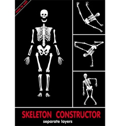 Human skeleton bones vector