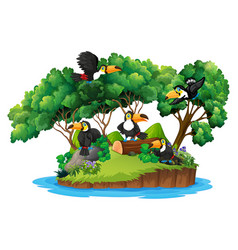 isolated nature island with toucan vector image