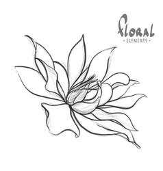 delicate lotus drawn pencil vector image vector image