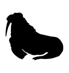 walrus side view vector image vector image