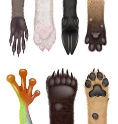 Animals paw realistic wild body parts dog vector