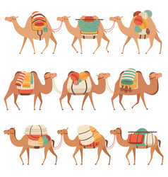 camels set desert animals walking with heavy load vector image