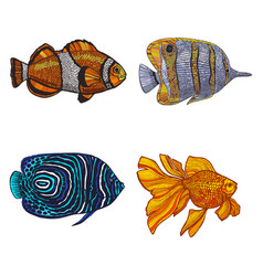 colored set of fish in hand-drawn style vector image