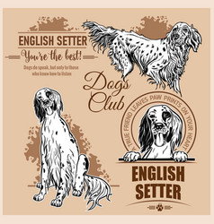 English setter - set for t-shirt logo and vector