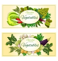Healthy vegetable banner set with fresh veggies vector image