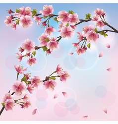 Light background with sakura blossom Japanese vector image vector image