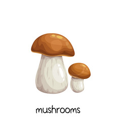 porcini mushrooms or boletus edulis vector image
