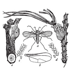 Resin gnat vintage vector