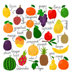 tropical fruit set with signs vector image