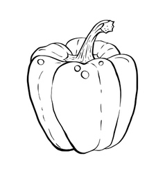 Outline hand drawn sketch of paprika vector image